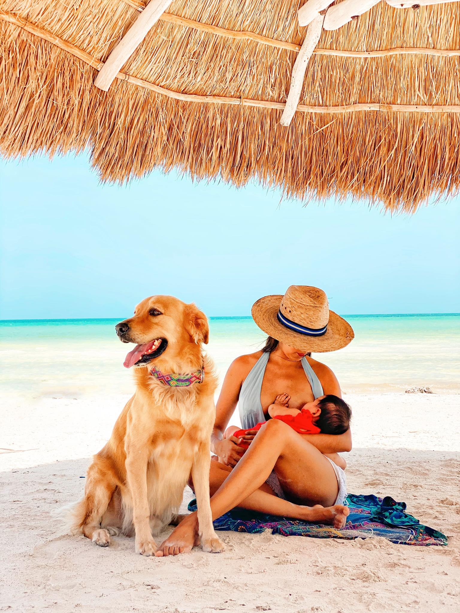 perro holbox perro de isla holbox, dog retriever from holbox murph murphy
