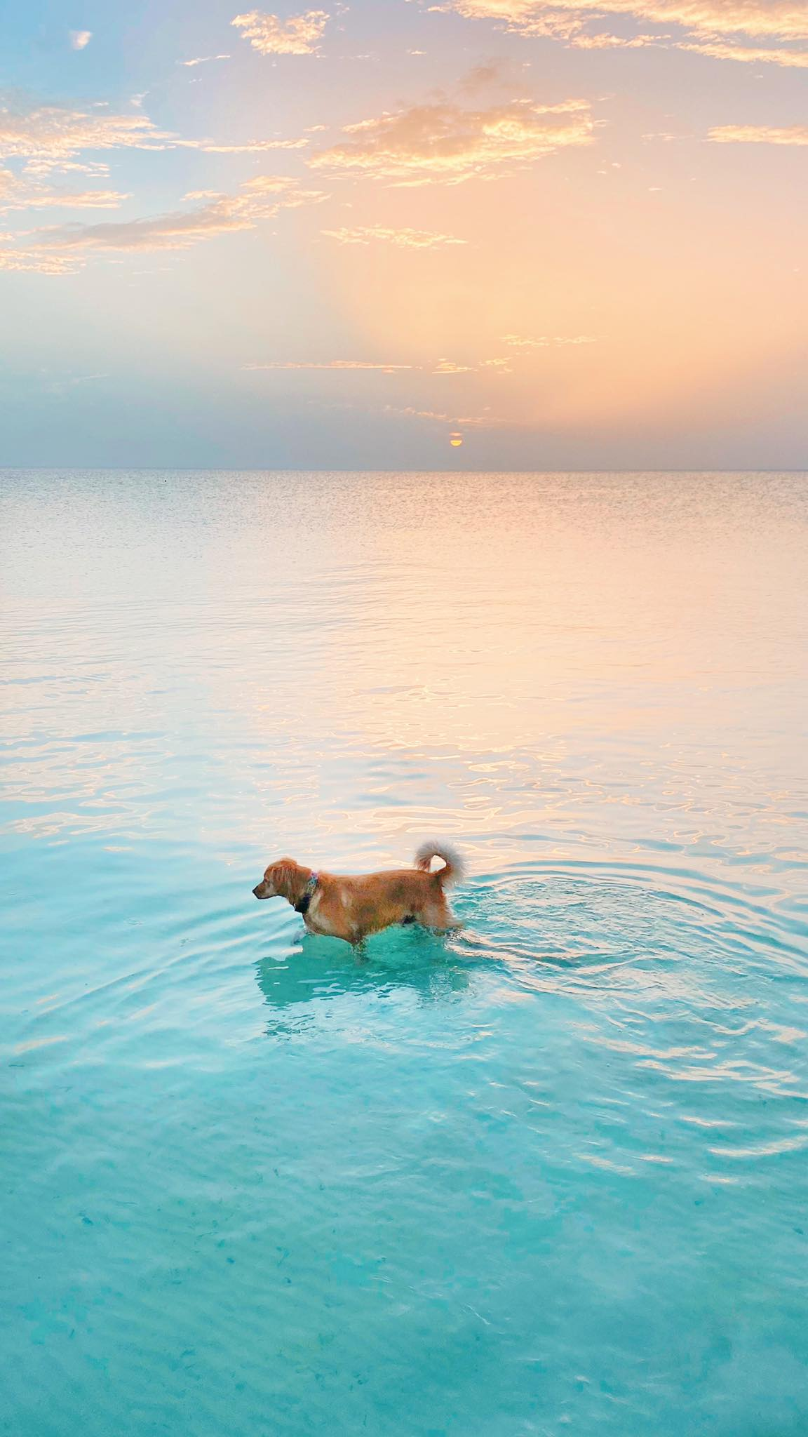 isla holbox perro murph murphy golden retriever