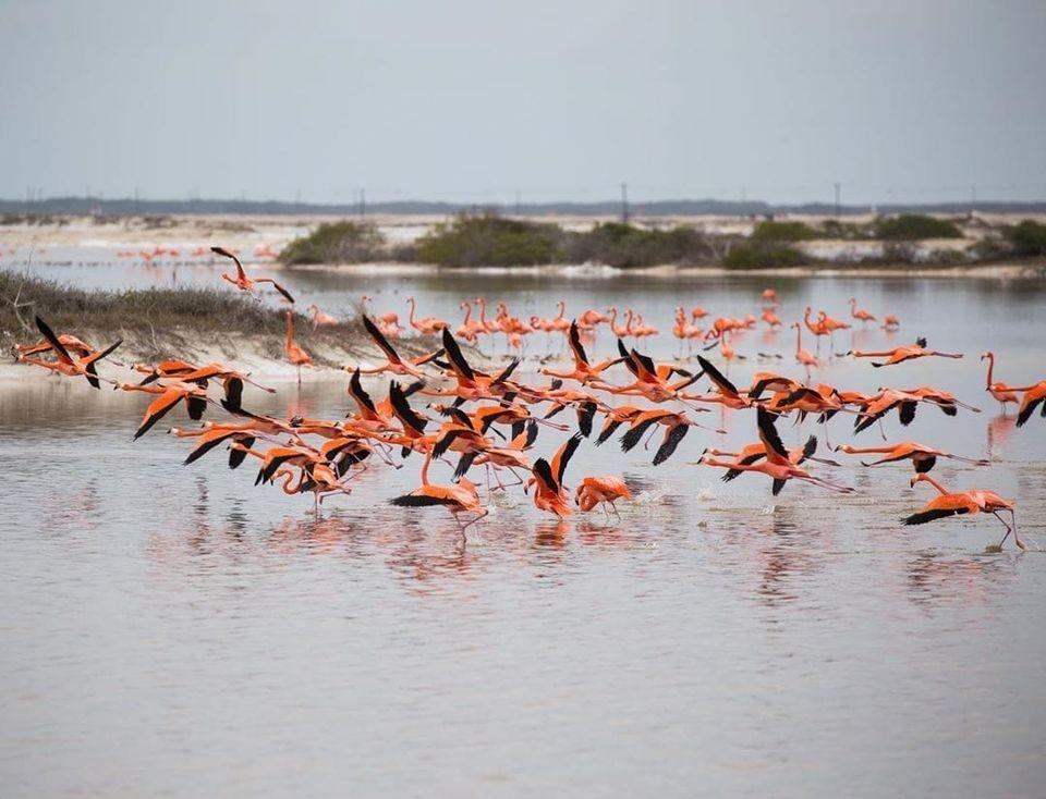 turismo en yucatan flamencos reactivacion turistica
