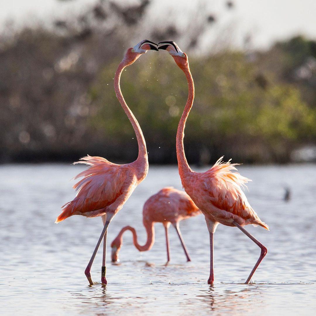 flamencos rio lagartos