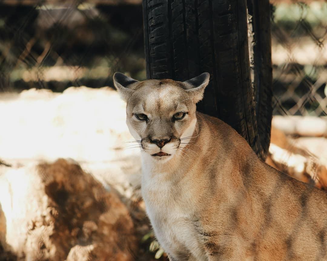 zoologico de merida, centenario merida, top yucatan, yucatan peninsula