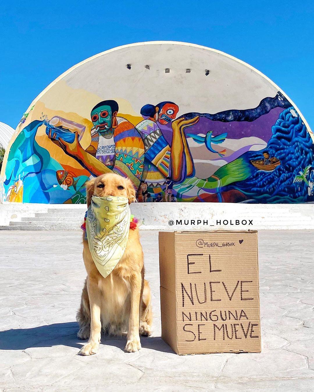 dog from holbox, murph murphy retriever holbox island top yucatan