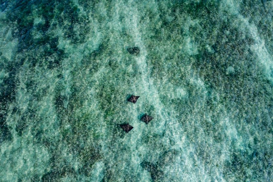 mantarrayas arrecife tulum