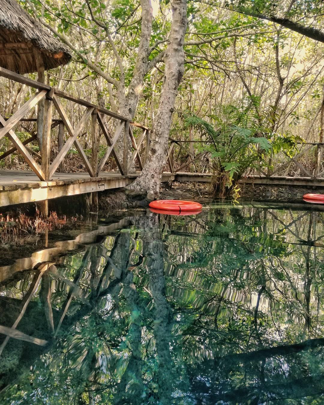 manglares de san crisanto