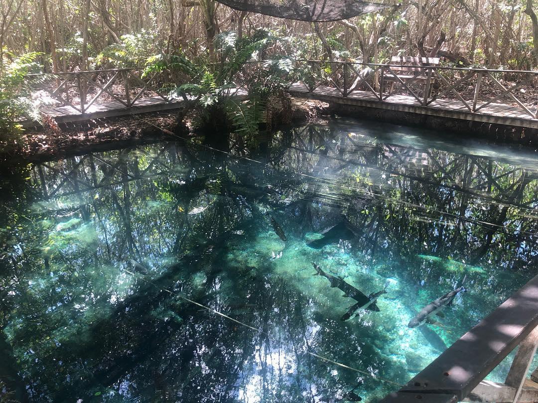 manglares san crisanto