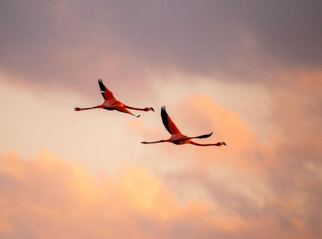 flamingos en yucatan