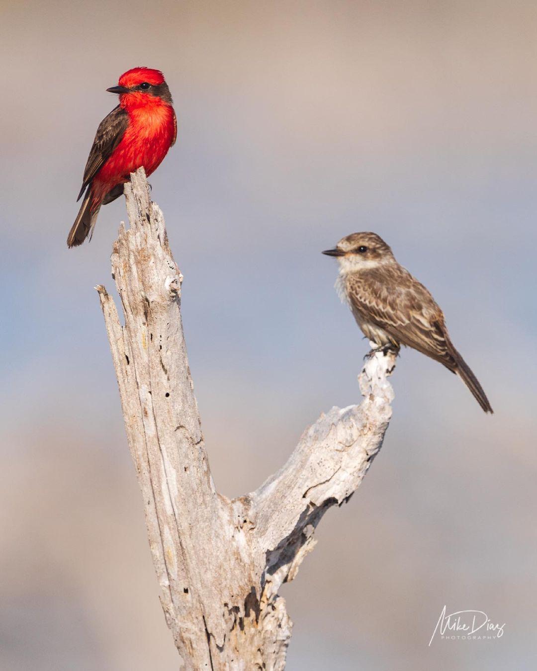 aves de yucatan
