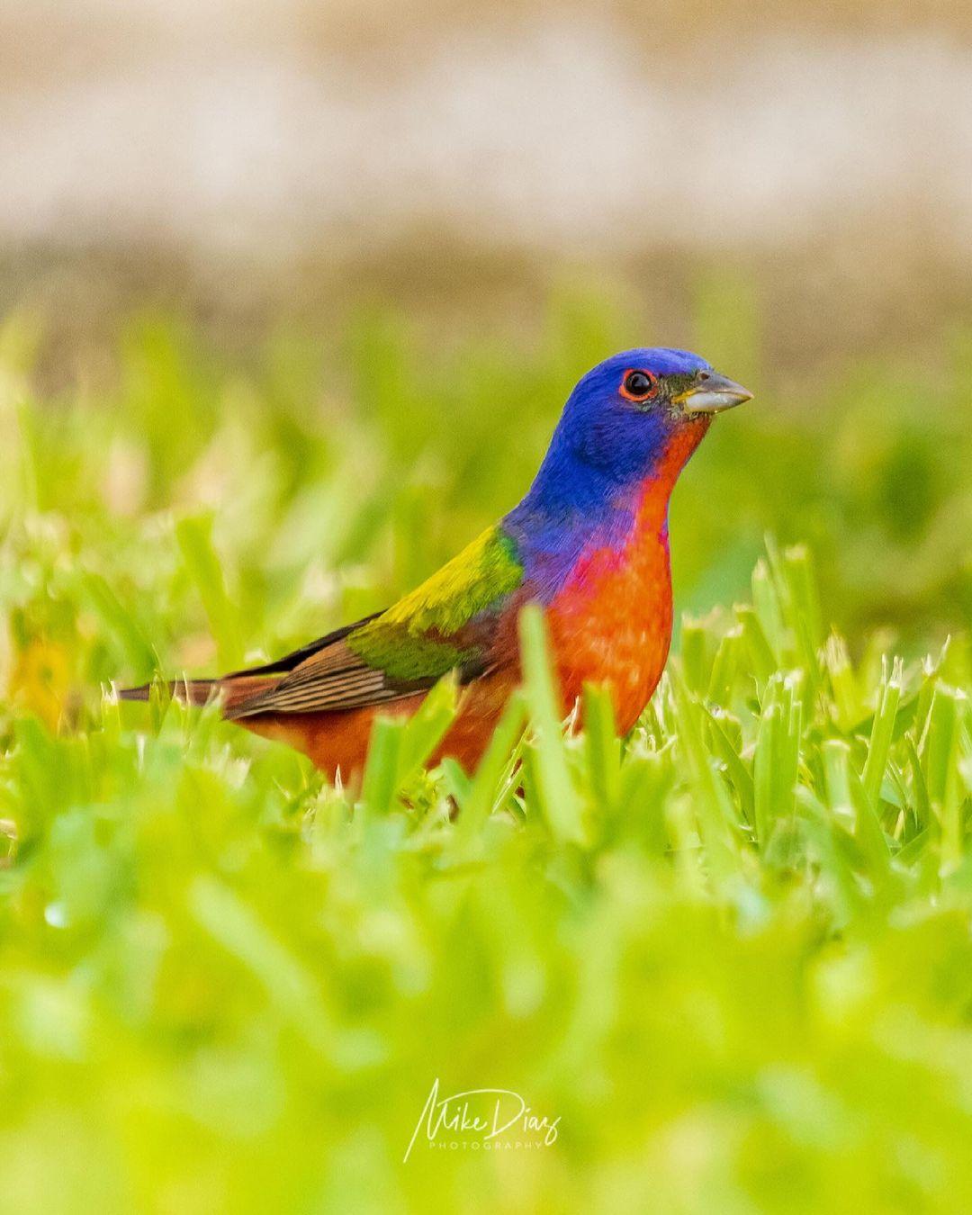 aves más hermosas de yucatan