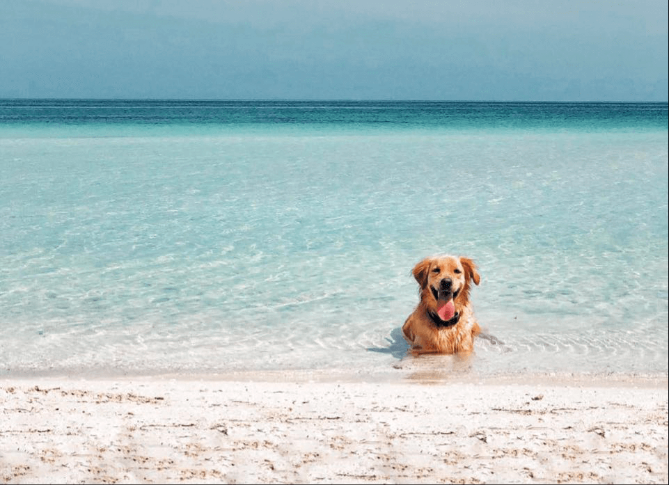 top yucatan stories holbox island perro holbox