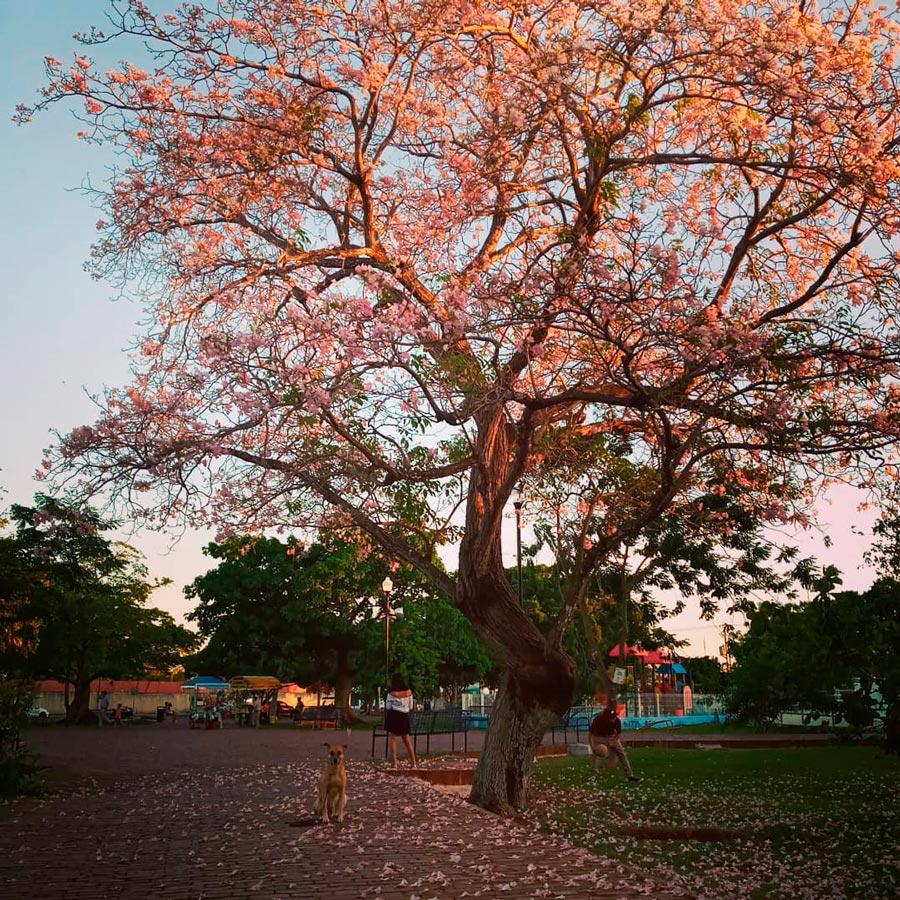 Qué hacer en Mérida en Familia