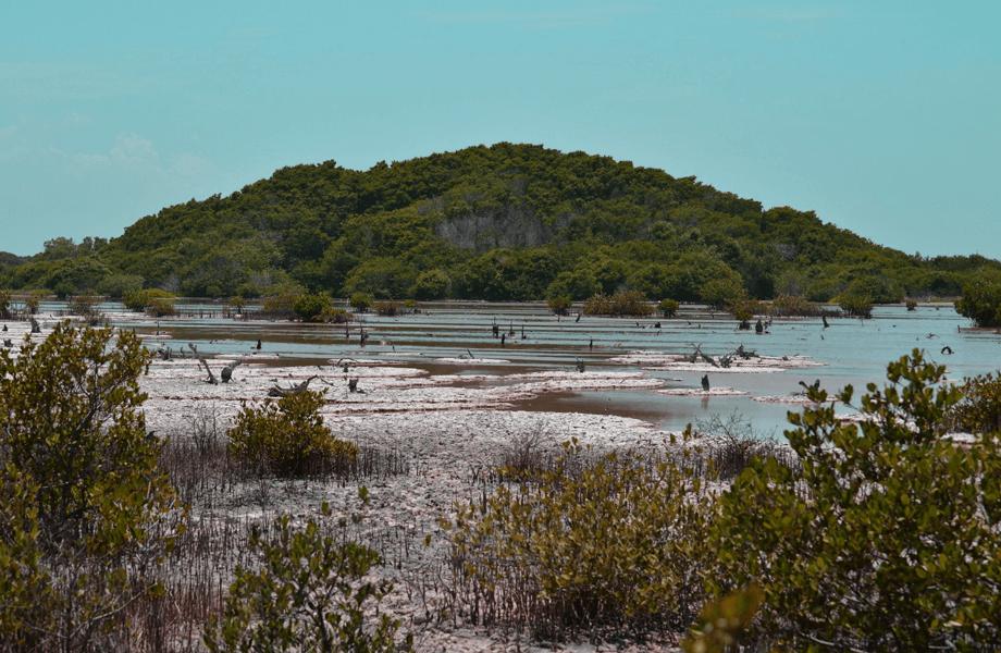 Telchar Puerto