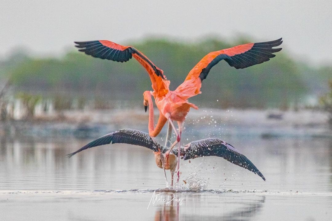 10 aves que puedes encontrar en Yucatán