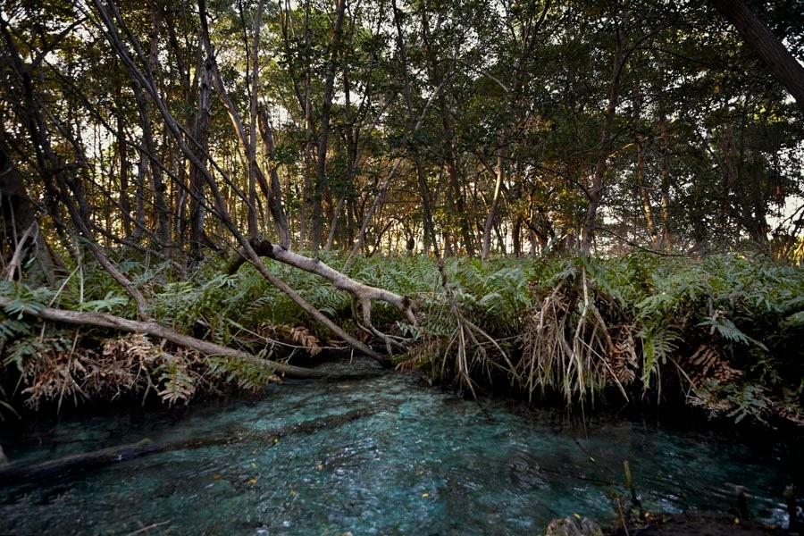 5 Ojos de Agua en Yucatán que parecen de otro mundo