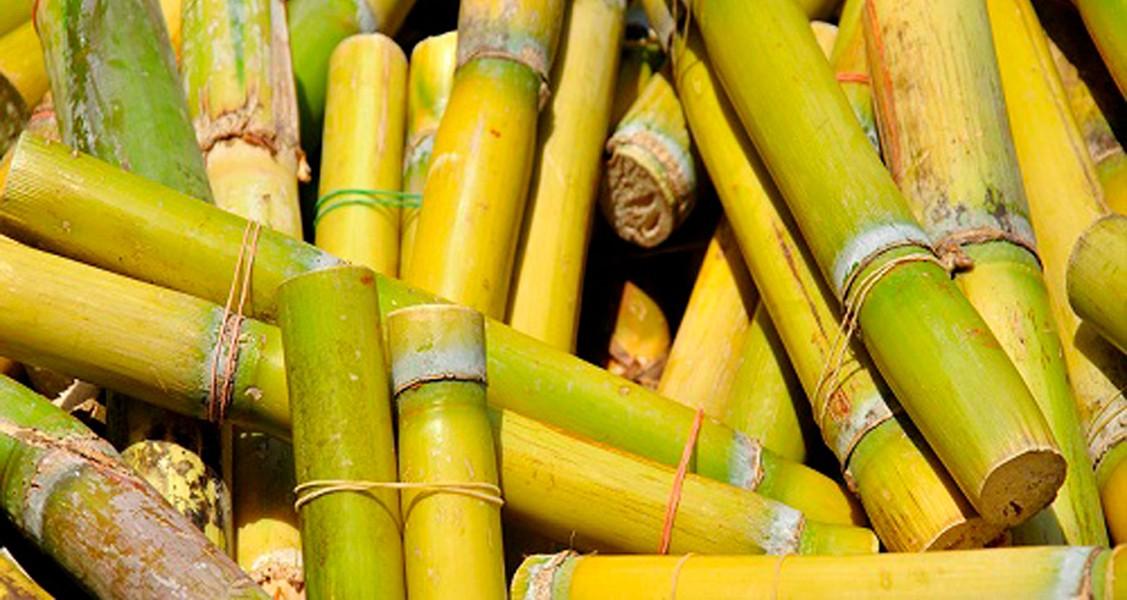 La Caña de Azúcar en la Historia de Yucatán