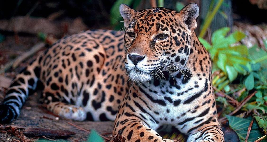 La Fauna en Yucatán