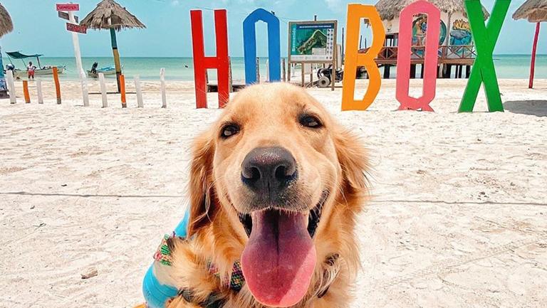 La Historia de Murph, el perro más famoso de Isla Holbox