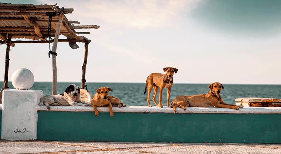 ¿Qué es un Perro Malix?