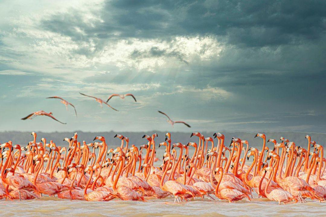 ¿Qué hacer en Celestún? El paraíso de los Flamencos