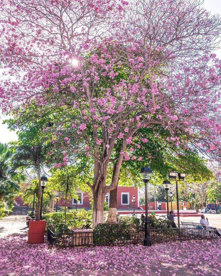 Yucatán y sus hermosos arboles